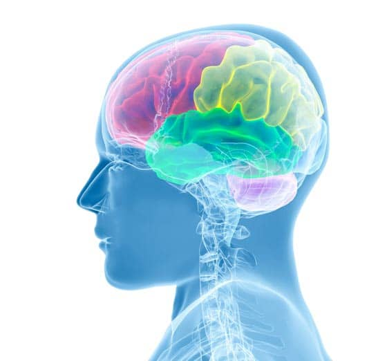 Imagerie neurologique tete cou